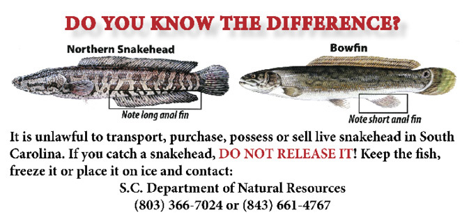 Know the difference between snakehead and bowfish
