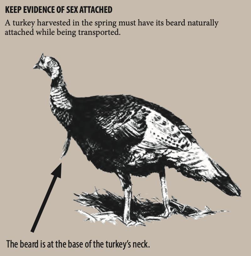 Turkey Evidence
