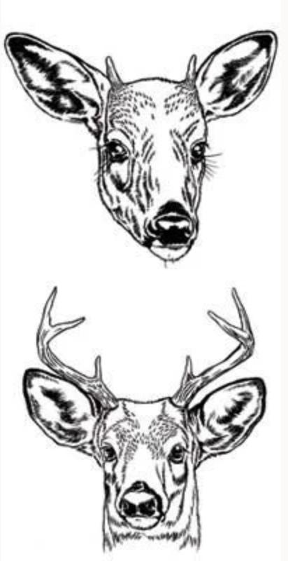 Protected Deer