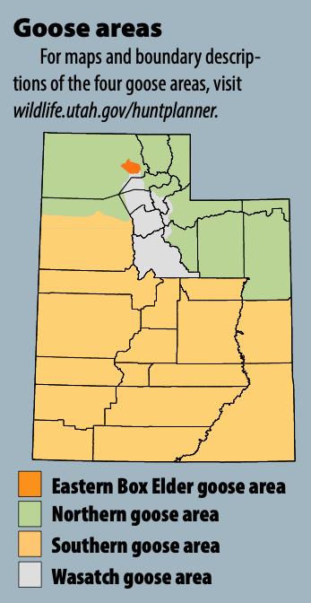 Goose areas