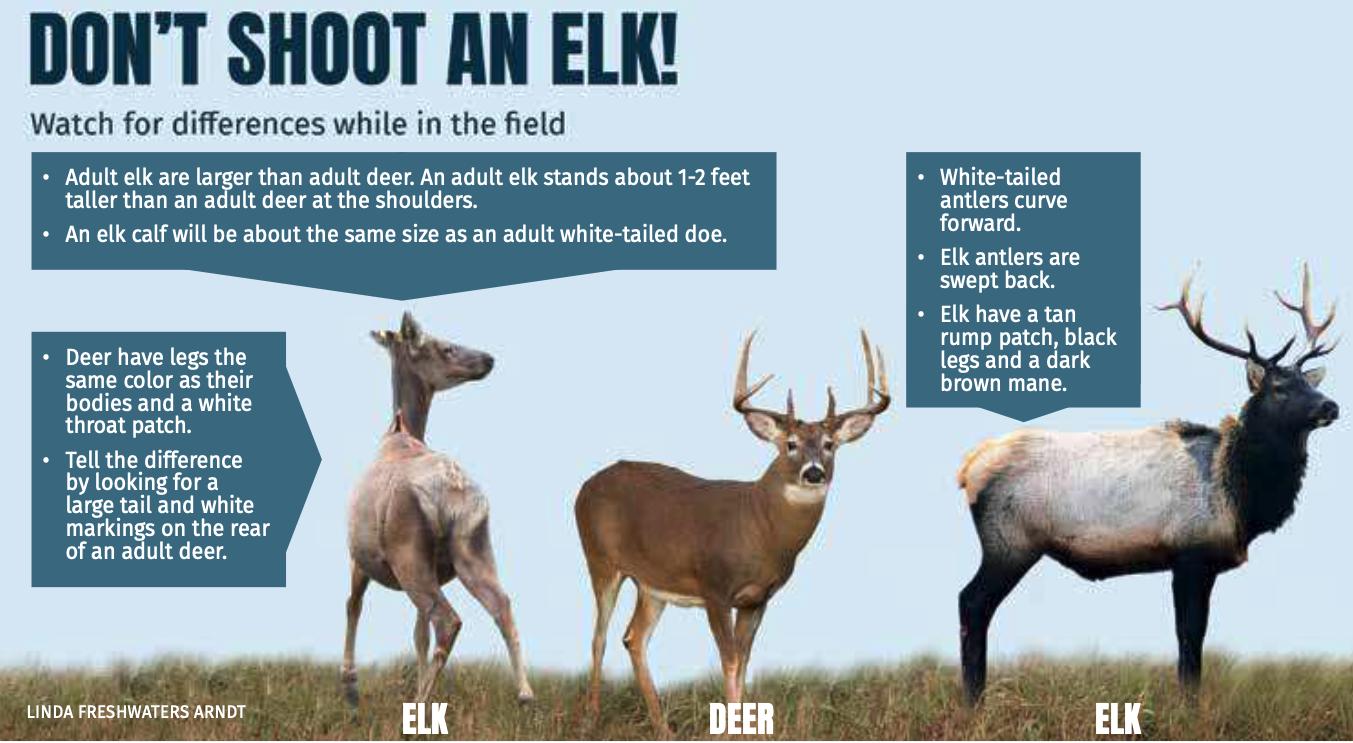 Don't Shoot an Elk